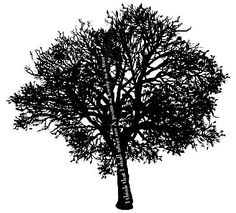 """Super cool tat. Quote by Joyce Kilmer """"I think that I shall never see a poem as lovely as a tree."""""""