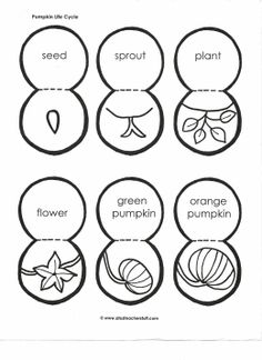 Pumpkin Lifecycle