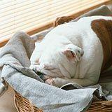 sleeping bulldog - love it too!
