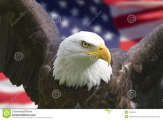 American Eagle With Flag - Download From Over 39 Million High Quality Stock Photos, Images, Vectors. Sign up for FREE today. Image: 1605949