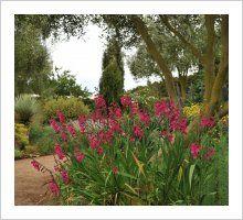 The Dry Garden and New Mediteranean Garden   Lambley Nursery