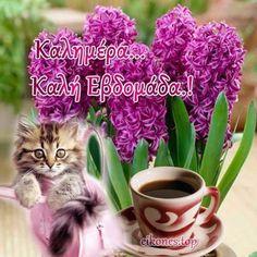 Good Morning, Wine, Buen Dia, Bonjour, Good Morning Wishes