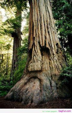 Kan ein nytte naturen til noko i denne samanheng? Dollsteinshola eller liknande? Wonders of nature Makes me think of the tree in Game of thrones
