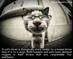 17 Fun Cat Facts