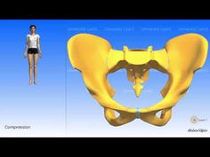 Arthrology of the pelvis the symphysis pubis Youtube, Muscle, Plunge Pool, Learning, Muscles, Youtubers, Youtube Movies