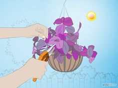 Take Care of a Wandering Jew Plant