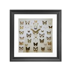 We've all seen shadow boxes filled with authentic butterfly specimens. A staple of science classrooms and museums alike, the display is a striking way to show off the beauty of the butterfly. This Butt...  Find the Butterfly Display Art Print, as seen in the A Luxury Camping Retreat Collection at http://dotandbo.com/collections/a-luxury-camping-retreat?utm_source=pinterest&utm_medium=organic&db_sku=108806