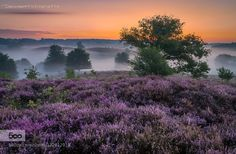 Purple morning by Dennisartphotography #landscape #travel
