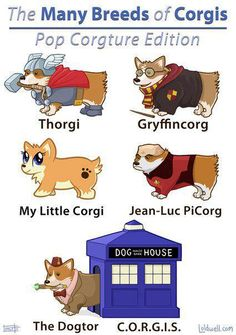 The many breeds of corgis, pop corgature edition