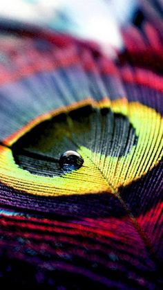 Colorful Peacock Feather Macro Android Wallpaper