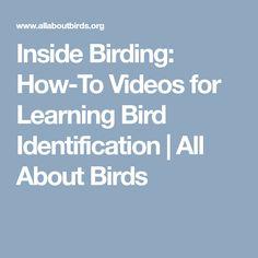 Inside Birding: How-To Videos for Learning Bird Identification   All About Birds Bird Identification, Bird Watching
