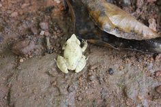 This is frog(23) found near wild woods spa.  For information log on to: http://www.wildwoodsspa.com