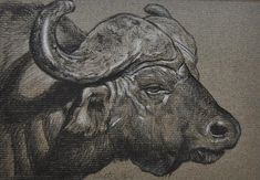 Cape Buffalo Drawing by Calvin Carver