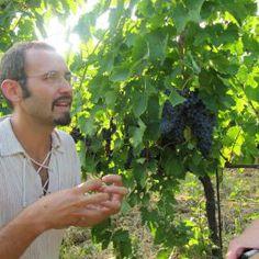 Roberto erklärt gerne (auf deutsch), was seinen Biowein ausmacht - Bio Urlaub in der Toskana