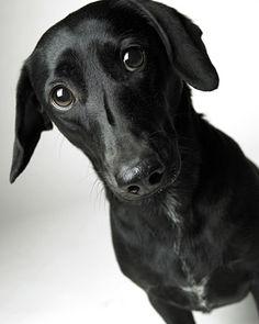 AWE! Puppy dog eyes!!