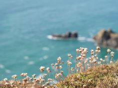 As well as a general goals list & travel wishlist, I also keep an ongoing 'Cornwall' bucket list too. This county may be tiny, but it is full to the brim with wild and wonderful nooks and crannies that I am yet to explore! Despite having lived here for most of my life, there are so many places I haven't... Read More