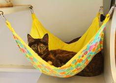 This is a basic hammock comfortable for your cat and attractive in your house. With these lively colors the pet hammock will be a nicely decorative piece too. Also if you are passionate it can be a very easy DIY project. Diy Cat Hammock, Hammock Ideas, Baby Hammock, Cat Cages, Cat Enclosure, Cat Room, Cat Condo, Animal Projects, Diy Projects