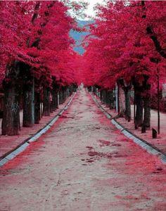 Burgundy street in Madrid, Spain