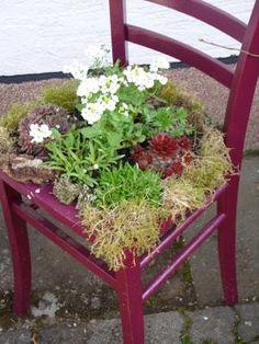 Gartendeko selber machen stuhl als pflanzk bel garden - Bepflanzter stuhl ...