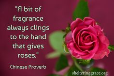 """""""A bit of fragrance always clings to the hand that gives roses."""" - Chinese Proverb #quotes #kindness"""