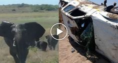 Turista Filma o Momento Em Que o Seu Carro é Projetado Várias Vezes Por Um Elefante Enraivecido