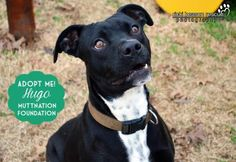 5 / 10    Petango.com – Meet Hugo, a 1 year 3 months Terrier, Pit Bull / Mix available for adoption in TISHOMINGO, OK Address  10881 S Dogwood Road , Unit, TISHOMINGO, OK, 73460  Phone  (580) 371-3929  Email  rr@muttnationfoundation.com