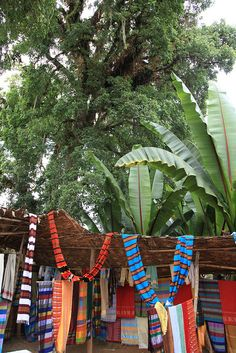The Dorze tribe are renowned for a rich weaving tradition, be it cotton, bamboo and other natural fibres and materials. The village is located in the highlands above the small town of Arba Minch. Ethiopia.       Click on the pic above for more details.  http://www.ethnicbeautysupplies.com