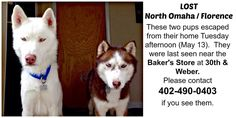 #LOSTDOGS 5-13-14 #OMAHA #NE Two #SIBERIANHUSKIES BAKERS STORE AT 30TH & WEBER 402-490-0403 https://m.facebook.com/story.php?story_fbid=785905418089072&substory_index=0&id=132303150115972