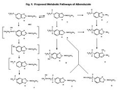 Albendazole, marketed as Albenza among others, is a benzimidazole medication…