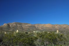 Yucca in bloom. Big Bend National Park. Photography by: Tim Speer