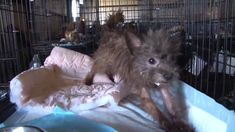More Than 100 Animals Rescued from Arkansas Puppy Mill == to anyone even THINKING about getting a puppy... don't pay these people. You might think you are rescuing, but if you pay someone for a puppy, you are propagating this kind of abuse! Adopt, don't SHOP!!