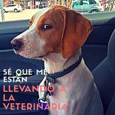 """¿Tu perro también pone su """"CARA DE VETERINARIA""""? 😂 ------- #instapets #instaperros #instadogs #argentina #pet #pets #pluv #perro #perros #perritos #mascotas #mascoteros #igersdog #petshop #picoftheday #ilovedogs #perrosdeinstagram"""