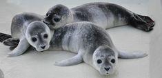 Friedrichskoog - Nordsee  ☀️ Der Badestrand in Friedrichskoog Spitze ist Wiese, kein Sand - Watt wandern, Deichspaziergänge zwischen Schafherden, Möwen füttern und natürlich Heuler gucken in der Seehundstation