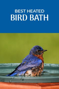 As it gets colder you'll want to continue to provide water for your backyard birds. The best way to do that is with a heated bird bath. Here we help you identify the best options.   #Birds #BirdWatching #BirdFeeding #Birding Small Birds, Little Birds, Heated Bird Bath, Humming Bird Feeders, Backyard Birds, Birdwatching, Wild Birds, Blue Bird, Bird Houses