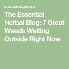 The Essential Herbal Blog: 7 Great Weeds Waiting Outside Right Now