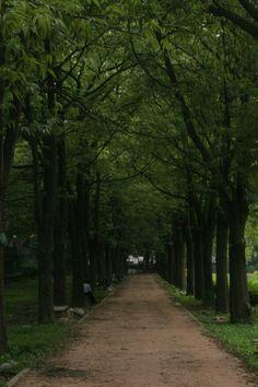 Love the greenery..cubbon park