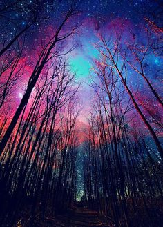 Milky Way colored sky and winter trees, made visible by time lapse. Pretty Pictures, Cool Photos, Amazing Pictures, Colorful Pictures, Beautiful Sky Pictures, Pretty Images, Beautiful World, Beautiful Places, Amazing Places
