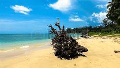 Driftwood on Wandoor Beach, Port Blair, Andaman and Nicobar Islands, India, Asia.