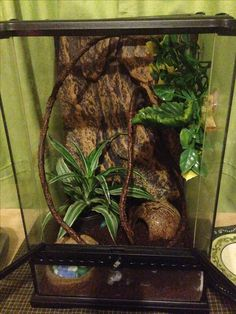My crested geckos habitat now I just need to pick up my Crestie tomorrow. :)