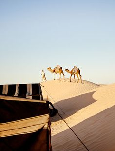 Tunisia desert near Douz - Camel riding is the best! Oasis, Places To Travel, Places To See, Voyager C'est Vivre, Travel Around The World, Around The Worlds, Largest Desert, Desert Life, North Africa