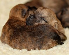 Cutest sleeping animal pictures