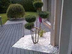 Ligustrum jonandrum agrémente une terrasse
