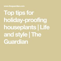 Top tips for holiday-proofing houseplants | Life and style | The Guardian
