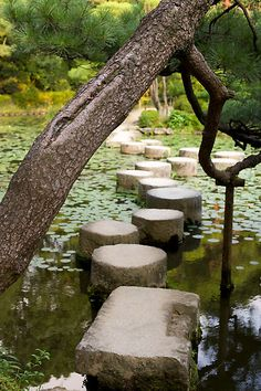 Japanese garden-don't have water or stone, but have plenty of tree stumps that would substitute for them through wooded area in backyard.