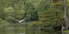 Big Thicket National Preserve in Texas