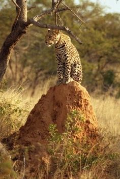 Etosha National Park, in Namibia is one of Sub Saharan Africa's finest Safari destinations: An excellent place for game viewing and especially...