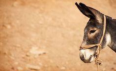 Donkey Cute Donkey, A Donkey, Doma Natural, Draft Mule, Pet 1, Colorful Animals, Zebras, Wildlife Photography, Farm Animals