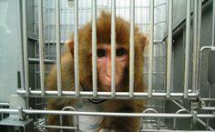 Essa vai para os defensores dos bichinhos! A equipe latino-americana da PETA, organização internacional de defesa aos direitos dos animais, acaba de divulgar lista com as seis empresas que mais maltratam os bichos em todo o mundo. Segundo a ONG,... Leia mais