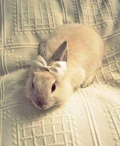 RAbbit kiut