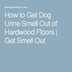 Image Result For How To Get Rid Of Cat Urine Smell From Apartment - How to get dog urine out of hardwood floors